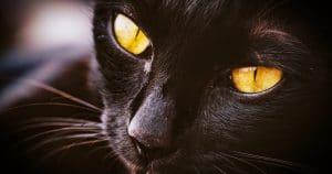 regali per gatti speciali